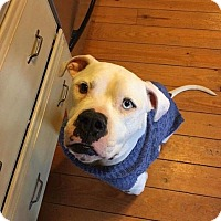 Adopt A Pet :: Skip - Currently unavailable due to medical issue - Centreville, VA