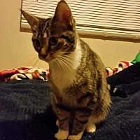Adopt A Pet :: Ms. Olivia - Mackinaw, IL