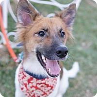 Adopt A Pet :: Oliver - Richmond, BC