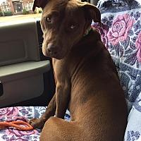 Adopt A Pet :: Ivy - Alabaster, AL