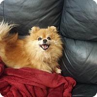 Adopt A Pet :: river - Sacramento, CA
