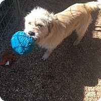Adopt A Pet :: WALLY - Glenburn, ME
