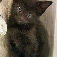 Adopt A Pet :: Skylar - Duluth, GA