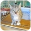 Photo 1 - Domestic Shorthair Cat for adoption in Pascoag, Rhode Island - Maria