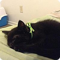 Adopt A Pet :: Stitch - Woodlawn, TN
