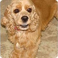 Adopt A Pet :: Bouncer - Sugarland, TX
