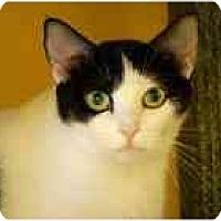 Adopt A Pet :: Prue - Marietta, GA