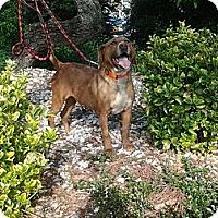Adopt A Pet :: Otis - Princeton, WV