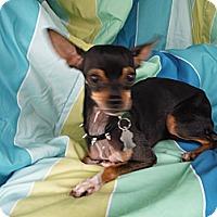 Adopt A Pet :: ELLA - Atascadero, CA