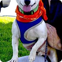 Adopt A Pet :: Nacho family dog - Sacramento, CA