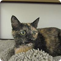 Adopt A Pet :: Enchilada - Medina, OH