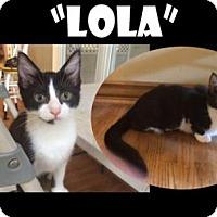 Adopt A Pet :: LOLA - Madison, AL