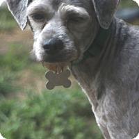 Adopt A Pet :: Putnam - MEET ME - Norwalk, CT