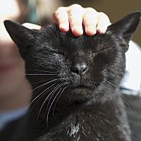Adopt A Pet :: Mr. Cassie - LaGrange, KY