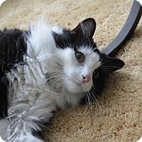 Adopt A Pet :: Bebe - Jackson, MI