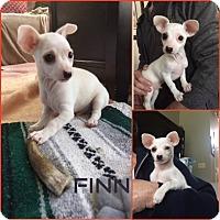 Adopt A Pet :: Finn - Yuba City, CA