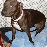 Adopt A Pet :: Sheebah - Kalamazoo, MI