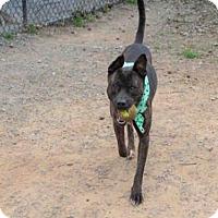 Adopt A Pet :: PEANUTBUTTER - Atlanta, GA