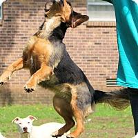 Adopt A Pet :: Cinder - Glastonbury, CT