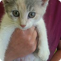 Adopt A Pet :: MAGIK - Cleveland, MS