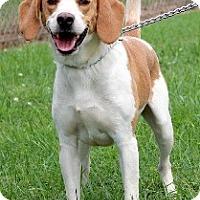 Adopt A Pet :: Pierce-URGENT - Providence, RI
