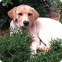 Adopt A Pet :: Margaret - Denver, CO