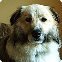 Adopt A Pet :: Benji - Harrisburgh, PA