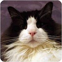 Adopt A Pet :: Thurston - Keizer, OR