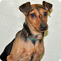 Adopt A Pet :: Jordan - Port Washington, NY
