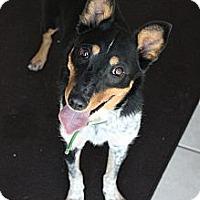Adopt A Pet :: Spots - Cedar City, UT