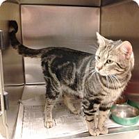 Adopt A Pet :: Cooper (Gentle Headbutter) - Arlington, VA