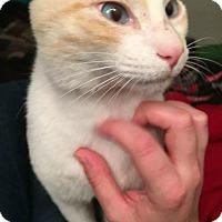 Adopt A Pet :: Feetsies - College Station, TX