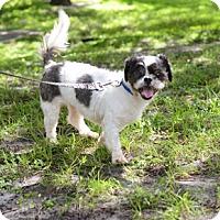 Adopt A Pet :: Pepper - Jupiter, FL