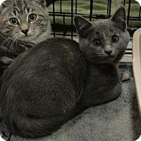 Adopt A Pet :: Morticia - Sacramento, CA