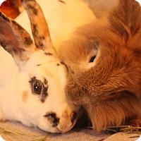 Adopt A Pet :: Hugs and Kisses - Hillside, NJ
