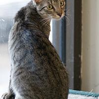 Adopt A Pet :: BOBBIE - Houston, TX