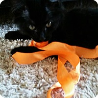 Adopt A Pet :: Zoey - Loveland, CO
