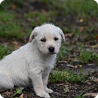 Adopt A Pet :: Janci - Groton, MA