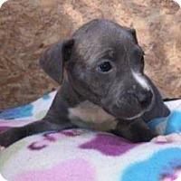 Adopt A Pet :: Junior - Dana Point, CA
