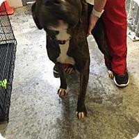 Adopt A Pet :: Louie - Paducah, KY