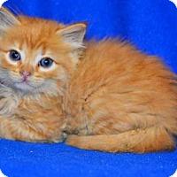 Adopt A Pet :: Oliver - Buford, GA