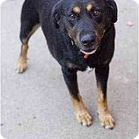 Adopt A Pet :: Norman - Portland, OR
