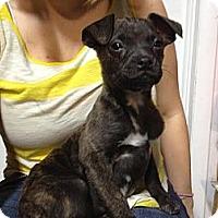 Adopt A Pet :: Brandon - South Jersey, NJ