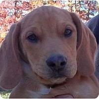 Adopt A Pet :: Winston - Plainfield, CT