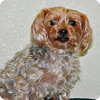 Adopt A Pet :: Bianca - Port Washington, NY