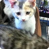Adopt A Pet :: Kayley - Hamilton, ON