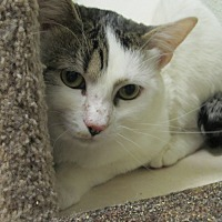 Adopt A Pet :: Caesar - Oakland, OR