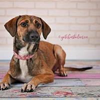 Adopt A Pet :: Abby 3181 - Toronto, ON