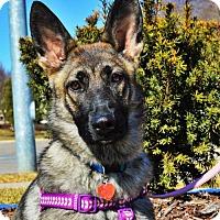 Adopt A Pet :: Bailey *Pre-Teen* - Gretna, NE