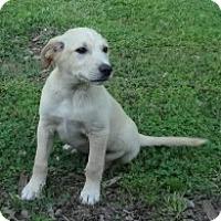 Adopt A Pet :: Scotty meet me 5/19 - Manchester, CT